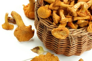 Raw Chanterelles Mushrooms