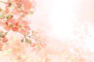 Soft sweet orange flower