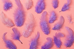 serenity colored feathers