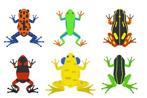 Frog cartoon tropical animal vector