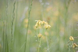 Yellow Flowers #1
