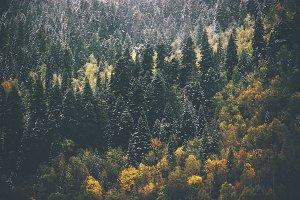 Autumn Coniferous Forest Landscape