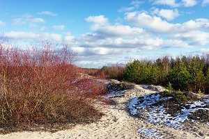 Sand dunes in the early spring