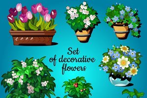 Set of decorative house plants