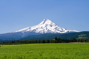 Mt Hood with pasture