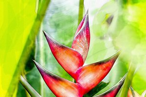 watercolor of Heliconia flower
