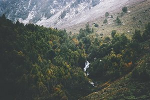 Autumn Coniferous Forest and river