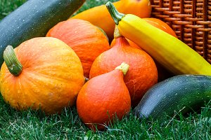 Fresh, healthy, organic pumpkins