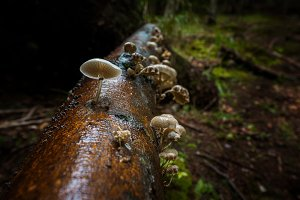 Mushrooms in a gloomy forest