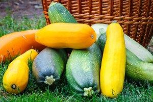 Fresh, healthy, organic zucchini