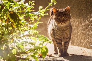 Alley cat in the sun