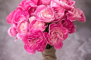 Lovely carnation flower