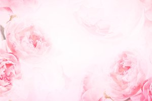 Rose romance background