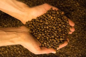 Roasted coffee beans closeup