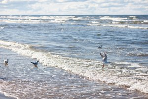 Seagulls and surf on the Baltic Sea