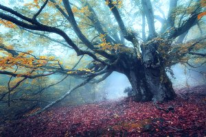 Mystical autumn forest in fog