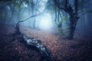 Fall forest in fog