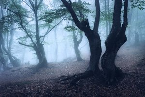 Enchanted trees in foggy forest