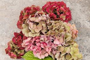 Hortensia flowers bouquet
