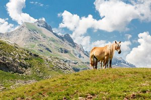 Horse in the Pyrenees Mountains