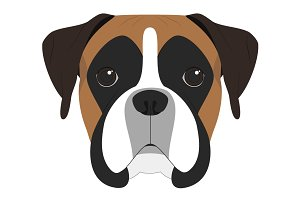 Boxer dog Vector Illustration