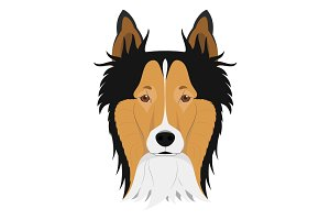 Collie dog Vector Illustration