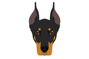 Doberman dog Vector Illustration