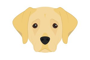 Labrador Retriever Illustration