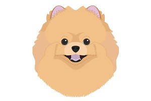 Pomeranian Spitz Vector Illustration