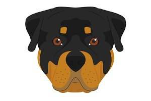 Rottweiler dog Vector Illustration