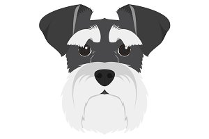 Schnauzer dog Vector Illustration