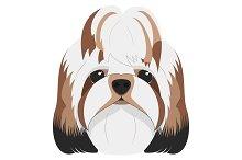 Shitzhu dog Vector Illustration