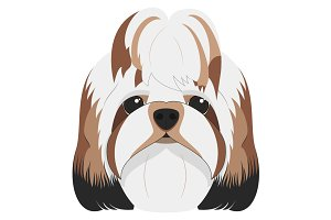 Shitzhu dog Vector Illustration