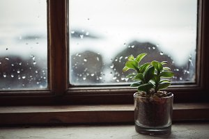 Small plant next to the window