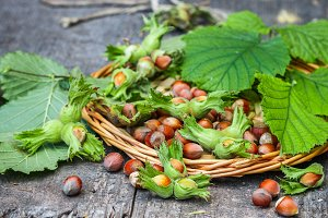 Hazelnut in shell with leaves
