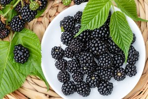 Ripe juicy blackberries with leaves