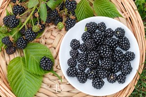 Ripe juicy blackberries