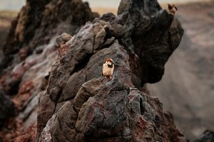Birds in the rock