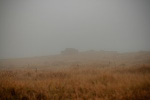 Dry grass in fog