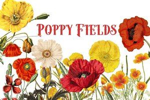 Vintage Poppies Clipart