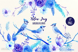 Watercolor Clipart Blue Jay