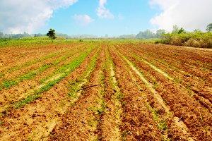 Landscape of Agricultural