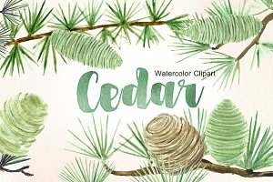 Cedar. Forest watercolor clipart.
