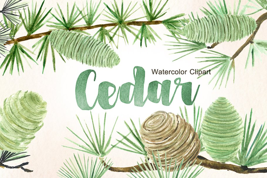 cedar forest watercolor clipart illustrations creative market creative market