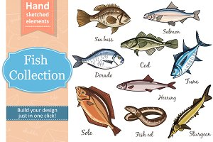Fish Collection and patterns