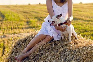 young girl in a white dress is sitting with Jack Russell Terrier dog on the haystack