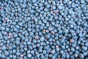 Blueberries for background