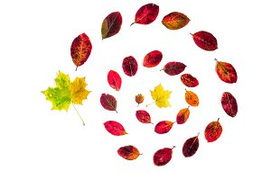 Spiral of autumn leaves isolated on white background