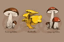Wild mushrooms. Vector
