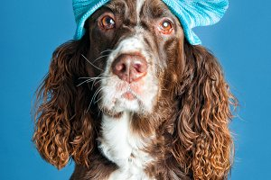 dog wearing a winter hat